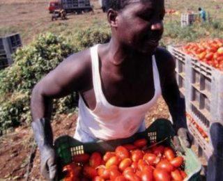 Huelga en Puglia, Italia, por 16 jornaleros muertos por ganar 3 euros por quintal de tomates