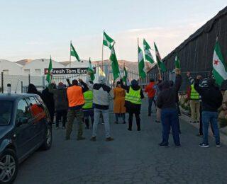 Huelga indefinida en Fresh  Tom Export: el sector hortofrutícola almeriense sigue en lucha